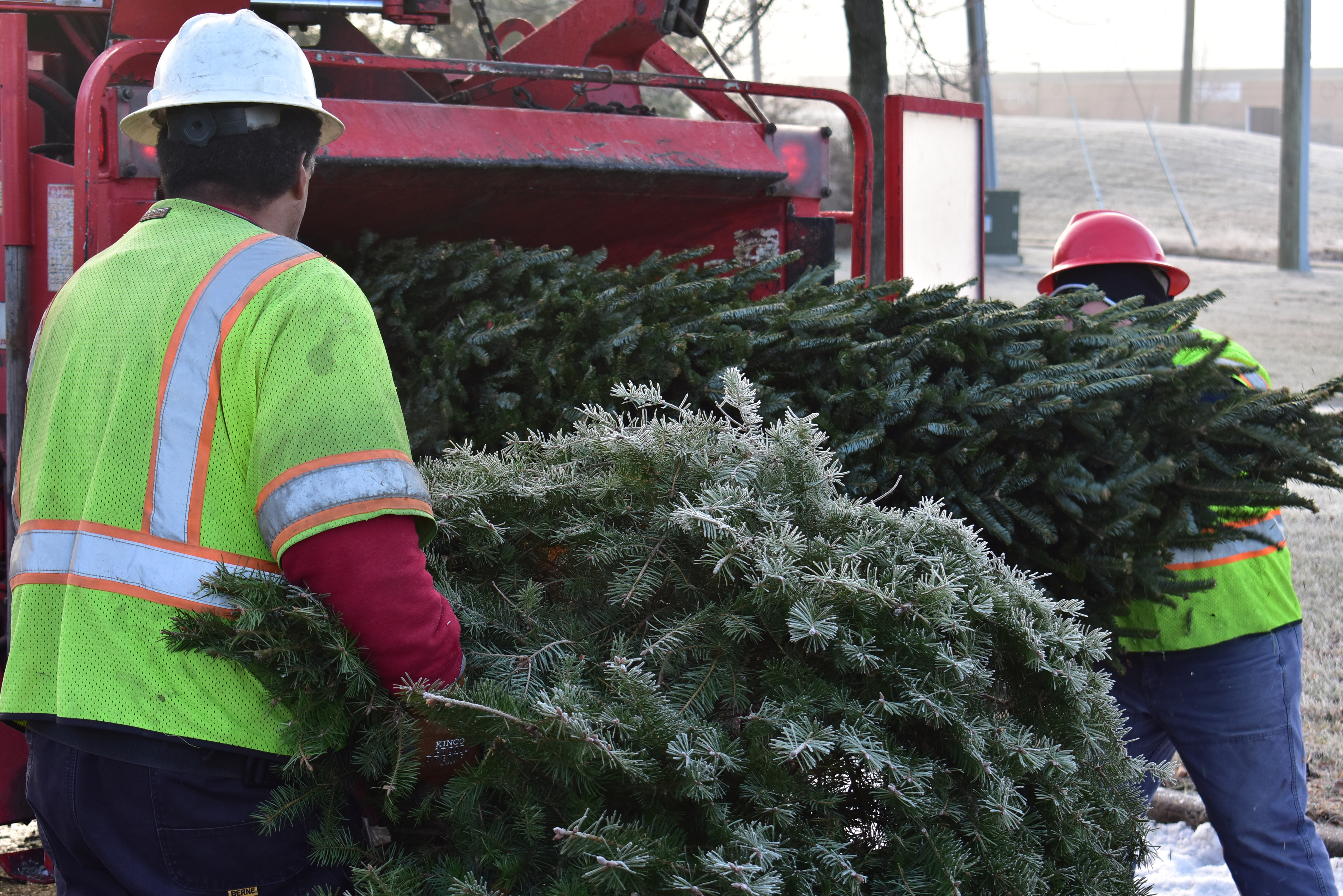 NOVEC Holiday Tree Recycling